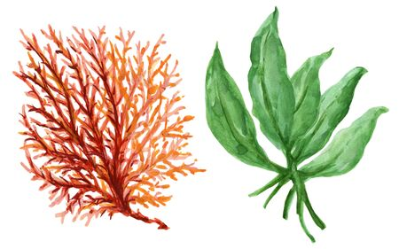 Watercolor gouache Seaweeds, Coral, Aquarium plants, underwater hand pianting. Colorful isolated set Illustration of aquatic plant, nature wildlife for card fashion fabric wallpaper