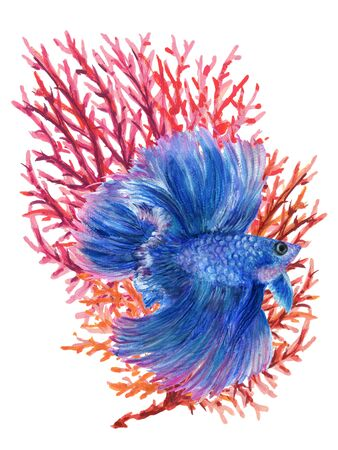 Watercolor Gouache beautiful Asian Chinese Japanese  Siamese Betta Fighting fish and Coral Aquatic plants elements hand paint decorative ornament Greeting card in Oriental stylei