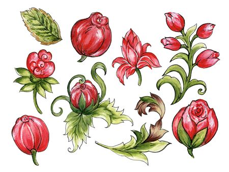 Watercolor illustration Botanical flower rose tulip leaves collection Set of wild and garden and abstract leaves elements hand painted