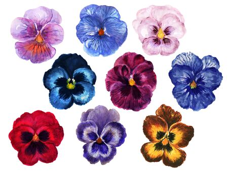 Hand painted floral pansy botanical blossom deep color and light navy wine burgundy red pink purple blue brown  element set on white
