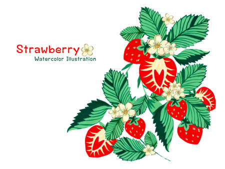 watercolor strawberries, whole berries and cut and little flower leaves elements bouquet frame label isolated on white hand painting