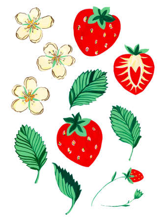 watercolor strawberries, whole berries and cut and little flower leaves elements isolated on white background