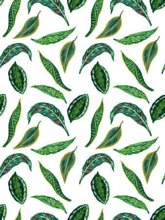 Watercolor gouache illustration Botanical leaves collection Tropical leaves houseplant hand painted seamless pattern texture textiles 版權商用圖片
