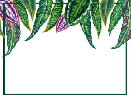 Watercolor blue and green and wine purple illustration foliage leaves collection houseplants and tropical leaves invitation card hand painted