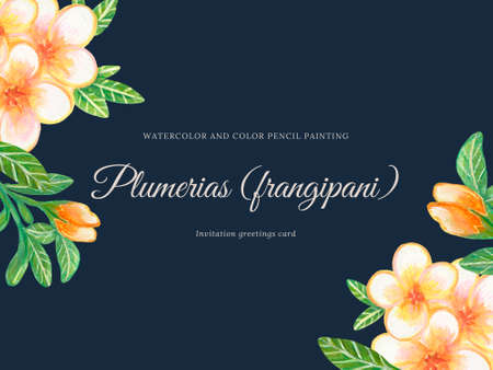 Watercolor Plumeria Frangipani botanical invitation party  Flower illustration for your projects, greeting cards ,print paper by hand 版權商用圖片