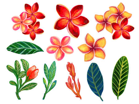 Hand painting element isolated on white elegant floral Plumeria Frangipani bouquet  leaves watercolor illustration