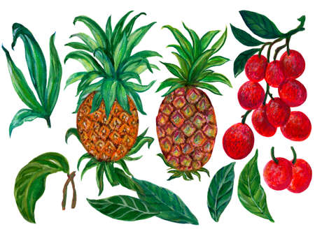 Tropical fruits plants Pineapple and Lychee arrangement isolated elements on the white background 版權商用圖片