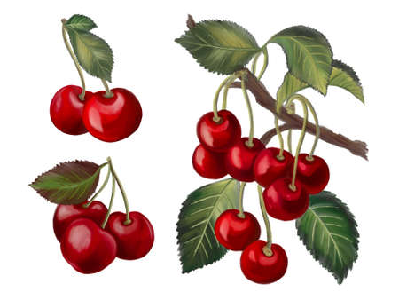 Bouquet botanical cherries foliage leaves digital clipart for invitation card party element  natural  and plants on white