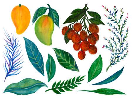 Set of fresh mango and rambutan elements isolated on white background watercolor illustration hand painting