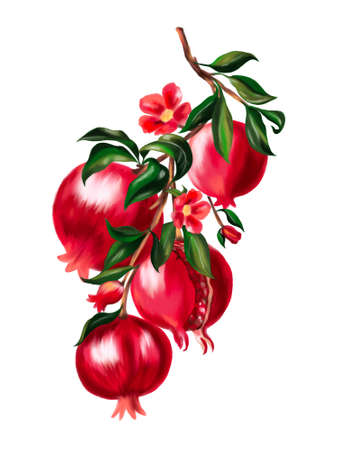 Hand painting watercolor illustrationinspired pomegranate and bloom bouquet foliage leaves forest tree element on white background 版權商用圖片
