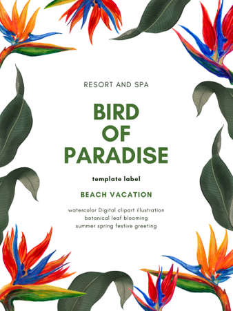 Hand painting watercolor illustrationinspired by tropical rainforest bird of paradise plants  greeting template on white 版權商用圖片