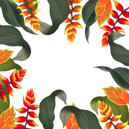 Heliconia plants  rsvp invitation greeting template botanical rainforest colorful print for your paper card hand painting 版權商用圖片