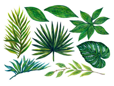 Hand painting watercolor illustrationinspired by ahouseplants tropical rainforest foliage leaf plants element on white background