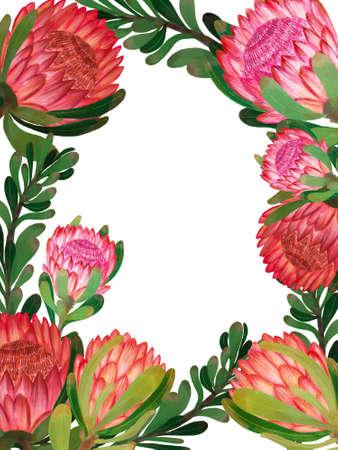 Protea flower foliage leaf botanical blooming digital drawing painting template frame label border for invitation card greeting 版權商用圖片
