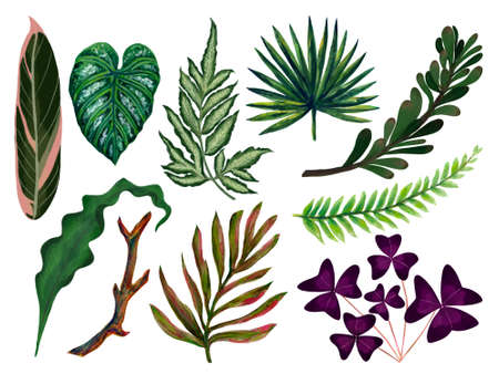 Hand painting watercolor illustrationinspired by houseplants tropical rainforest foliage leaf plants element on white background