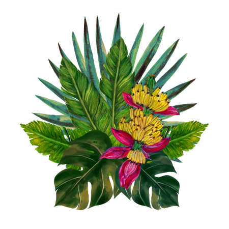 Tropical fruits plants  botanical leaves banana palm monstera bouquet arrangement isolated elements on the white background 版權商用圖片