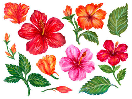 Watercolor gouache elements isolated elegant floral Hibiscus blossom foliage bouquet leaves watercolor illustration hand painting