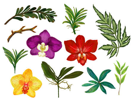 Watercolor gouache illustration Botanical orchid colorful flower leaves collection Set of wild and garden and abstract leaves elements hand painting 版權商用圖片
