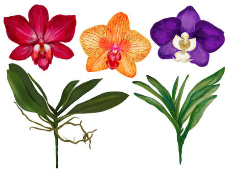 Watercolor gouache illustration Botanical orchid colorful flower leaves collection Set of wild and garden and abstract leaves elements hand painted