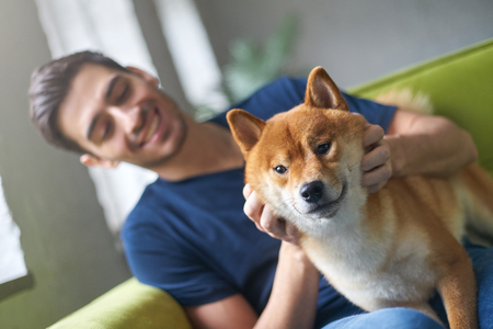 Close up portrait of Shiba Inu dog face, sitting on green sofa with owner. Best friend concept. Young caucasian male in casual t-shirt playing with his cute pet on couch at home, stroking and petting Stock Photo
