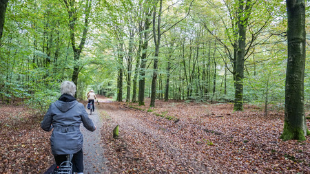 Bike Ride through the Forest in Holland photo