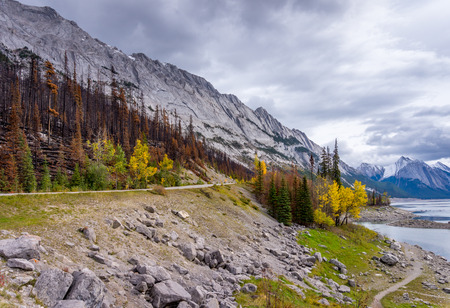 forest fire: Damage from a Forest Fire along the Maligne Lake Road in 2015 in Jasper National Park in the Canadian Rockies