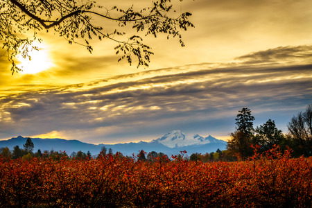 Sunrise over Mount Baker and blueberry fields in the fall in the Fraser Valley of British Columbia, Canada 版權商用圖片 - 47929200