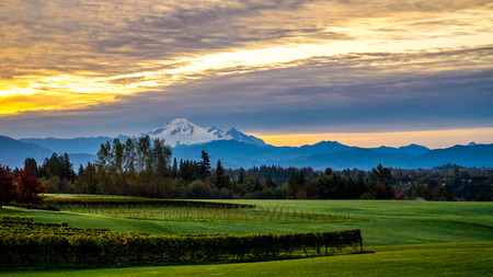 mount baker: Sunrise over Mount Baker and a vineyard in the Fraser Valley of British Columbia