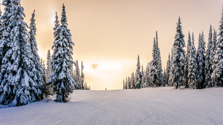ski runs: Sun breaking through the clouds on a ski hill in central British Columbia. Snow covered trees surrounding the ski runs Stock Photo