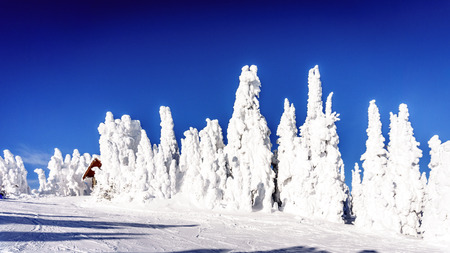 ghostlike: Ghost-like trees in the high alpine ski area at Sun Peaks village in the Shuswap Highlands in central British Columbia, Canada