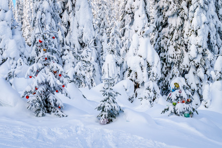 Decoration on snow covered trees in the forest on the ski hills of Sun Peaks in central British Columbia