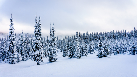 Snow Covered Trees and Blue Sky on the ski hills of Sun Peaks in the Shuswap Highlands in central British Columbia, Canada Imagens