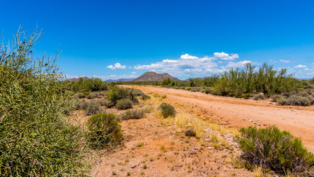 scorching: Gravel Road in the Arizona Desert with Saguaro Cacti and shrubs under Blue Sky on a summer day