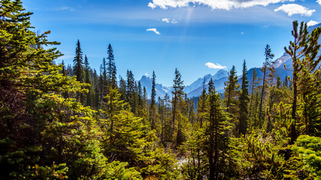 national forests: Isolated Peak and surrounding mountains and forests in Yoho National Park in the Rocky Mountains in British Columbia, Canada