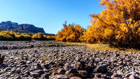 Fall colors along the Salt River in central Arizona, USA