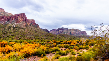 Fall colored trees and shrubs and the rugged mountains along the Salt River in central Arizona in the United States of America