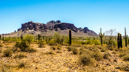 cholla: The town of Apache Junction at the foot of Superstition Mountain in Tonto National Forest in Arizona, USA