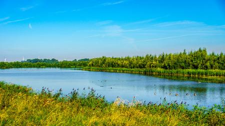 bird sanctuary: The bird sanctuary of the Veluwemeer near the town of Nijkerk in the Netherlands