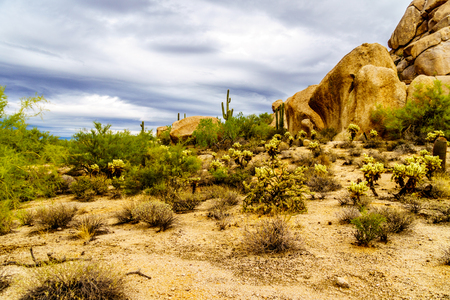 cholla: Desert landscape with Boulders with Saguaro and Cholla Cacti near the town of Carefree Arizona