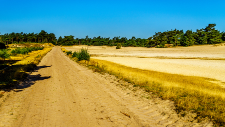 The mini desert of Beekhuizerzand on the Veluwe in the Netherlands in the province of Gelderland is the largest sanddrift area in Europe Stock Photo