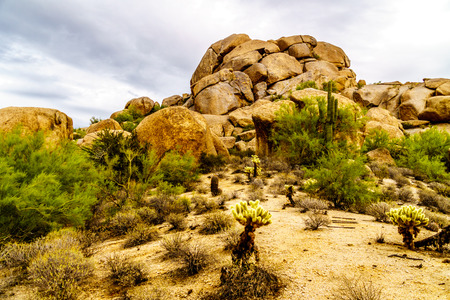 Desert landscape with Boulders with Saguaro and Cholla Cacti near the town of Carefree Arizona