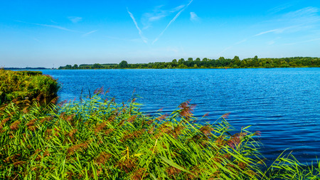 The bird sanctuary of the Veluwemeer near the town of Nijkerk in the Netherlands with Reeds and Forests on its shores
