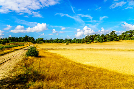 swept: Beekhuizerzand on the Veluwe in the Netherlands in the province of Gelderland is the largest sanddrift area in Europe Stock Photo