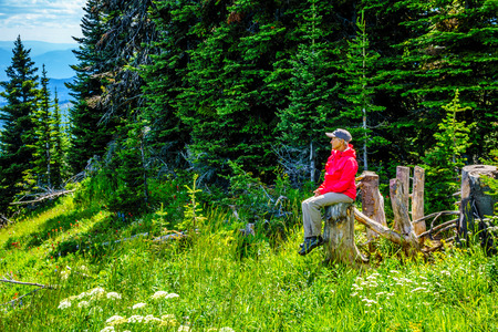 Senior Woman resting on a tree stump during a hike through the mountain alpine meadows with wild Flowers on Tod Mountain in the Shuswap Highlands of British Columbia, Canada Stock Photo