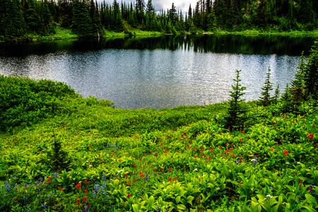 fleurs des champs: Tod lac à une altitude de 1995 mètres près du sommet de la montagne Tod dans les Highlands Shuswap du centre de la Colombie-Britannique. Alpine Meadows pleine de fleurs sauvages qui entourent le lac