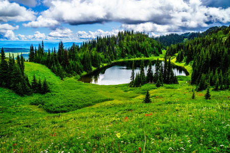 Tod Lake at an elevation of 1995 meter near the top of Tod Mountain in the Shuswap Highlands of central British Columbia. Alpine Meadows full of wildflowers surrounding the lake