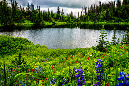 Tod Lake at an elevation of 1995 meter near the top of Tod Mountain in the Shuswap Highlands of central British Columbia. Alpine Meadows full of wildflowers surrounding the lake. Stock Photo