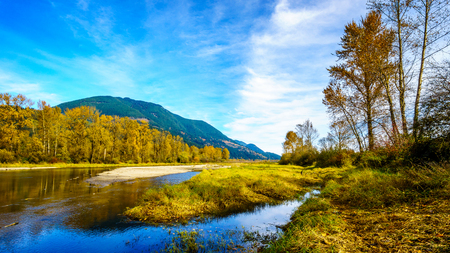 Fall Colors around Nicomen Slough, a branch of the Fraser River, as it flows through the Fraser Valley of British Columbia
