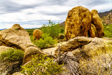 cholla: Cacti, Shrubs and large Rocks and Boulders in the desert near Carefree Arizona