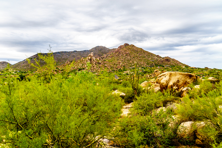 cholla: Cacti, Shrubs and large Rocks and Boulders in the desert near Carefree Arizona, USA with Black Mountain in the background